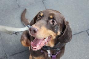 Einen Hund aus dem Tierheim holen – Mein Erfahrungsbericht
